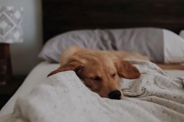 Eίναι καλό να κοιμάσαι με τον σκύλο σου;
